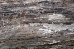 Wood Textures on Felled Tree. The surface of a recently felled tree with bark removed to reveal the lighter wood underneath Stock Photo