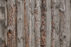Wood textures. Of nature. Russia Royalty Free Stock Images