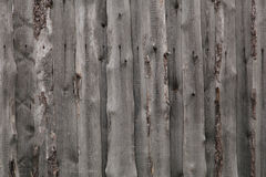 Wood textures. Of nature. Russia Stock Image