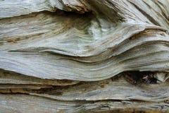 Wood textures Stock Image