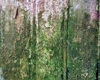 Wood texturgräsplan och rött Royaltyfria Foton