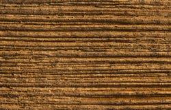 Wood texturkornbakgrund, träplanka Royaltyfri Foto
