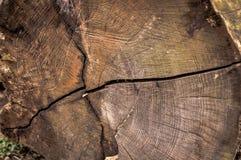 Wood texturnärbild, årliga cirklar, sprickor, splittringar, naturlig ph royaltyfri foto