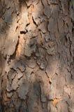 Wood texturskäll Royaltyfria Foton