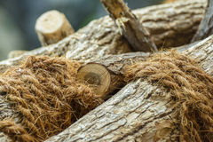 Wood tied with hemp rope Royalty Free Stock Photography