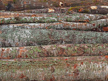 Wood timber pile, wooden lumber log background Stock Photo