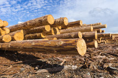 Wood timmerkonstruktionsmaterial för bakgrund och textur timmer Sommar blå himmel rått industrier Arkivbild