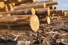 Wood timmerkonstruktionsmaterial för bakgrund och textur timmer Sommar blå himmel rått industrier Fotografering för Bildbyråer