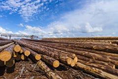 Wood timmerkonstruktionsmaterial för bakgrund och textur timmer Sommar blå himmel rått industrier Royaltyfria Foton