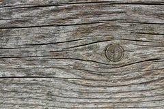 Wood tjock skivabakgrund Royaltyfria Bilder