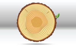 Wood trädtillväxtcirklar Arkivfoto