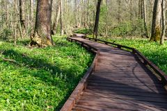 Wood trail in the forest, perspective view, background, Voronezh region, Russia royalty free stock photos