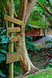 Wood Trail. Nature trail on Puerto Rico's Botanical Gardens in the city of Caguas Stock Images