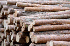 Wood. Treatment of wood, forestry. Forest business Royalty Free Stock Photo