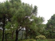Wood tree royaltyfri bild