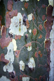 Wood Tree Body Bark Royalty Free Stock Photo