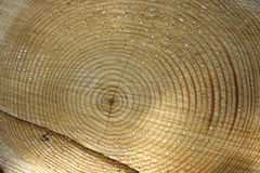 Wood from a tree. Stock Photo