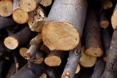Wood, Tree, Lumber royalty free stock photo