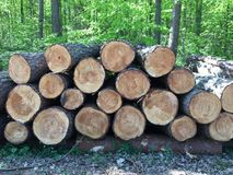 Wood, Tree, Lumber, Trunk stock images