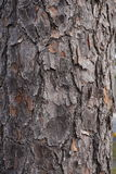 Wood tree natural texture background picture Stock Photo