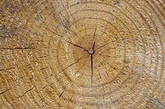 Wood Tree Rings Stock Image