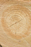 Wood tree rings background Royalty Free Stock Images