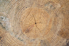 Wood tree rings Royalty Free Stock Photos