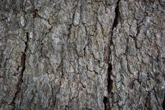 Wood Tree Texture Background Royalty Free Stock Image