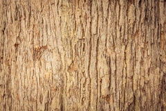 Wood Tree Texture Royalty Free Stock Photography
