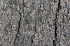 Wood Tree Texture Background Royalty Free Stock Photography