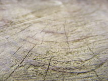 Wood. Tree trunk blurred on the edges Royalty Free Stock Photo