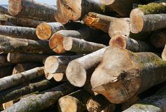 Wood , tree trunk, material, construction, forest Royalty Free Stock Photos