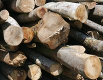 Wood , tree trunk, material, construction, forest Stock Photography