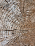 Wood tree trunk texture with rings Stock Photography