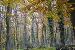 Wood trees. Beautiful view in wood Stock Images