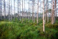 wood trees för snow för bakgrundsskognatur gröna wood solljusbakgrunder för natur - tappning e Royaltyfri Fotografi