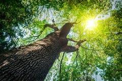 wood trees för snow för bakgrundsskognatur wood solljusbakgrunder för natur royaltyfria foton