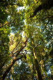 wood trees för snow för bakgrundsskognatur Royaltyfri Foto