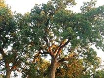 wood trees för snow för bakgrundsskognatur Arkivfoton