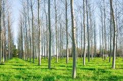 wood trees för snow för bakgrundsskognatur Gröna wood solljusbakgrunder för natur Royaltyfria Bilder
