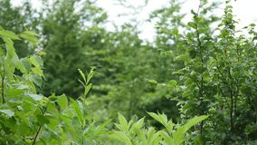 wood trees för snow för bakgrundsskognatur Gröna wood solljusbakgrunder för natur lager videofilmer