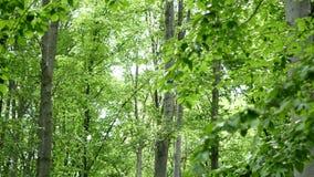 wood trees för snow för bakgrundsskognatur Gröna wood solljusbakgrunder för natur stock video