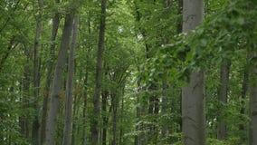 wood trees för snow för bakgrundsskognatur Gröna wood solljusbakgrunder för natur arkivfilmer