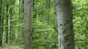 wood trees för snow för bakgrundsskognatur Gröna wood solljusbakgrunder för natur Selektivt fokusera stock video