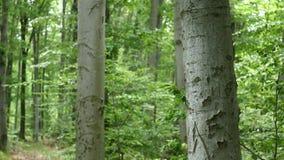 wood trees för snow för bakgrundsskognatur Gröna wood solljusbakgrunder för natur Selektivt fokusera arkivfilmer
