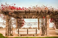Wood Trellis flowers San Diego Waterfront Stock Photo