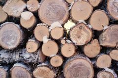 Firewood in stacks royalty free stock image