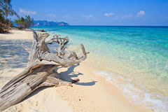 Wood on the tropical beach in Thailand Royalty Free Stock Photo