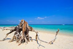 Wood on the tropical beach in Thailand Royalty Free Stock Photos