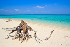 Wood on the tropical beach in Thailand Stock Photography